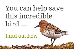 You can help save this incredible species