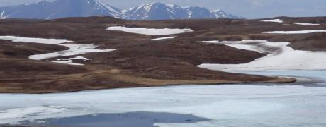Tundra ponds open for ducks (c) Karin Eberhardt
