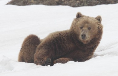 Teddy wakes up c Phil Palmer