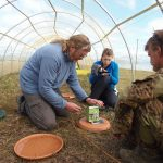 Roland, Egor and Nicky weigh the chicks prior to fitting their leg flags (c) Roland Digby
