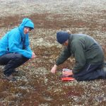 Roland and Nikolai collecting the first clutch of spoon-billed sandpiper eggs (c) Roland Digby