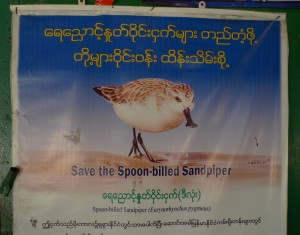 Save the Spoon-billed Sandpiper poster in a village on the coast of the Bay of Martaban