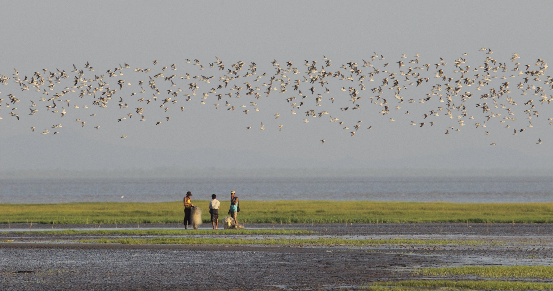 Waders at the gulf of Martban