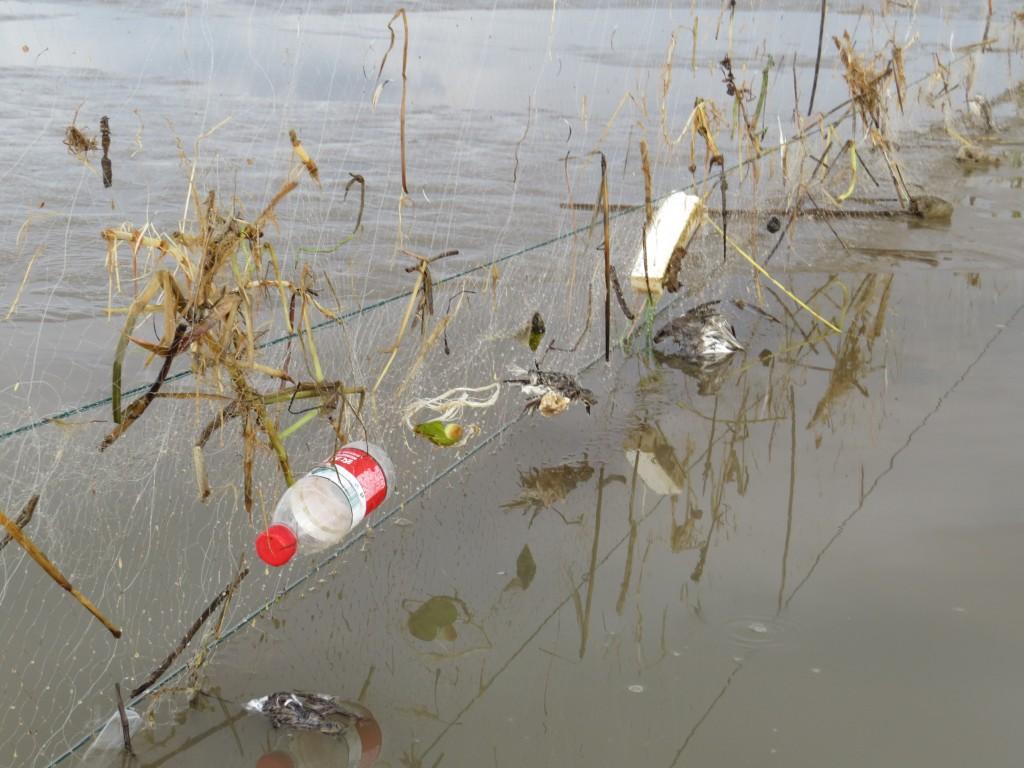 Dead birds in net © Nigel Clark (BTO) and Jing Li (SBS in China)