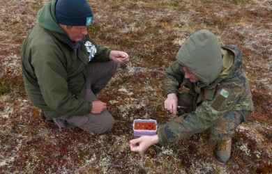 First egg collection of the 2016 expedition, 13 June 2016.