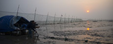 Phil Agland filming spoon-billed sandpipers on the coastal mudflats of East China