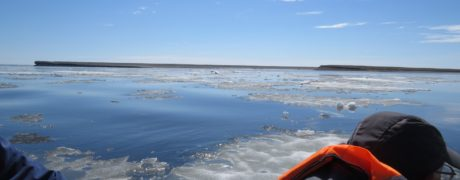 Carefully negotiating the ice flows. Photo by Nigel Clark.