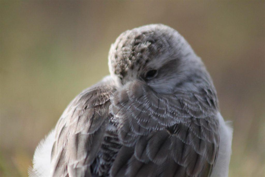 Snoozing Spoonie. Photo by Jodie Clements.
