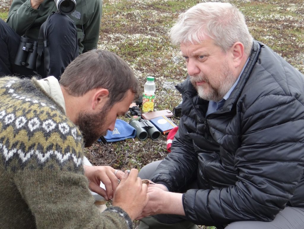 Ewan Weston and Evgeny Syroechkovskiy attaching a satellite tag to Lime 07, Meinypil'gyno, 7 July 2018. Photo by Pavel Tomkovich.