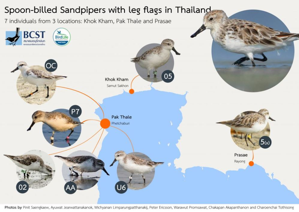Excellent BCST poster of leg-flagged spoonies in Thailand.